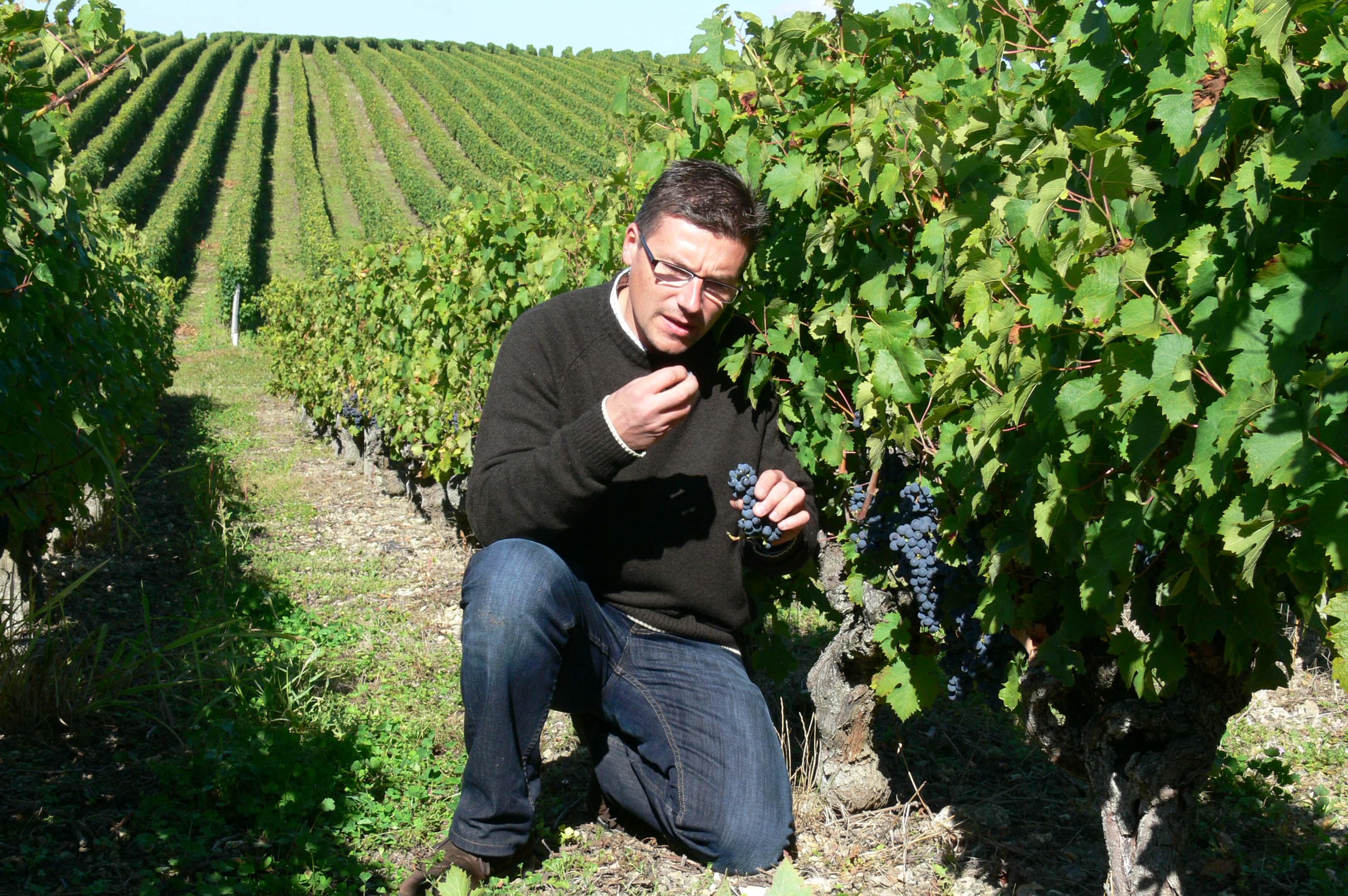 Cédric Allion Loire Vigneron Vignes